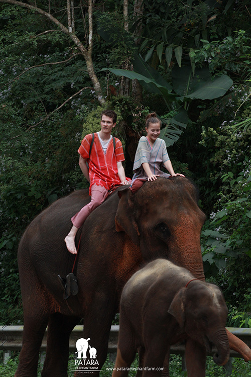 Elephant Owner For A Day