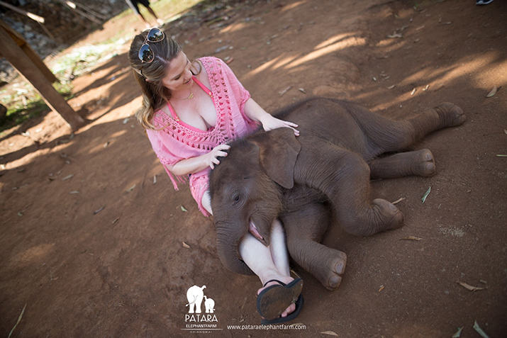Baby Elephant For A Day