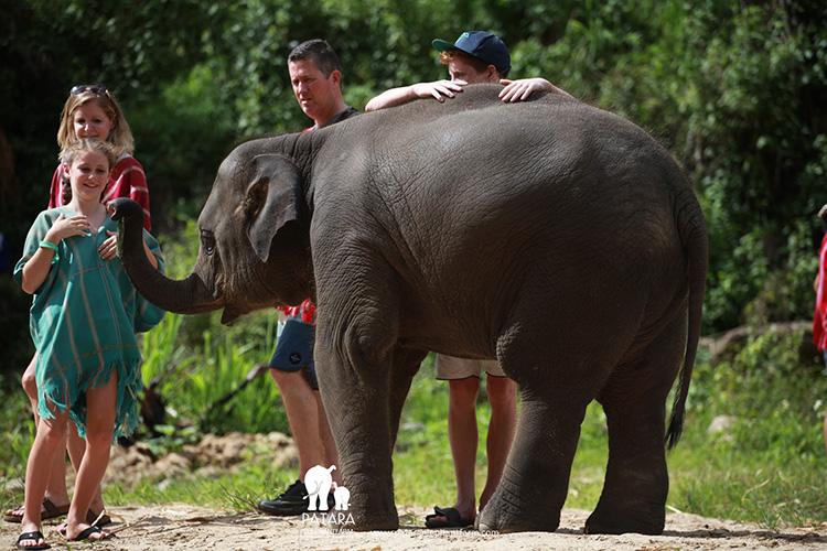 Elephant Day Care